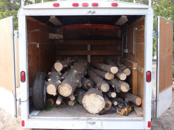 pine beetle logs 1